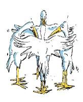 Stork_group_main3